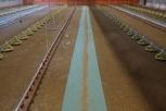 Kükenpapier grün 43gr./m², 220 mtr. x 66cm, 2 Rollen